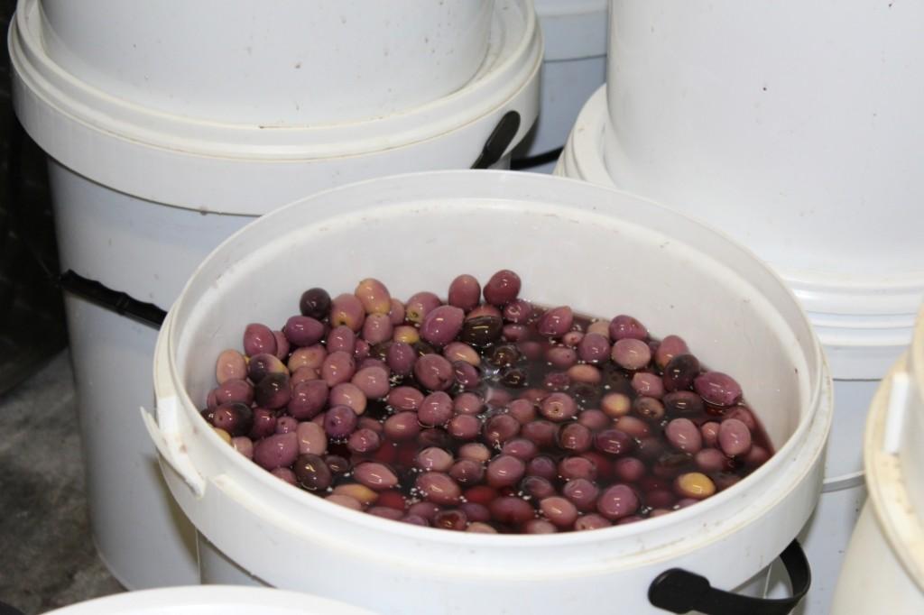 Black Olive Curing