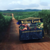 2017-06-12 16_28_13-Willow Creek - Follow The Olive 2017 - Olive Central